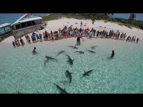 The Famous Shark Show Of The Bahamas