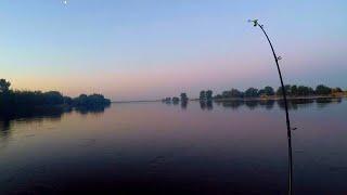 Рыбалка на Ахтубе Ловля судака на селедку Спасение собаки и неожиданный ночной гость