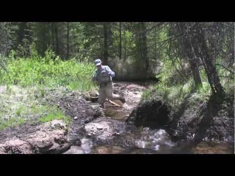 Episode 4: Greenback Cutthroat Trout in Colorado