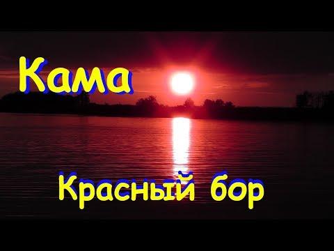 Вопрос: Чем заражены рыбные ресурсы реки Кама и ее водохранилищ?
