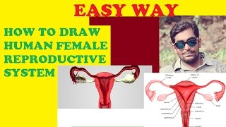 HOW TO DRAW  FEMALE REPRODUCTIVE SYSTEM (HUMAN)