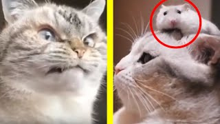 Funny Cats compilation😍 Funniest & cutest  moments🐱