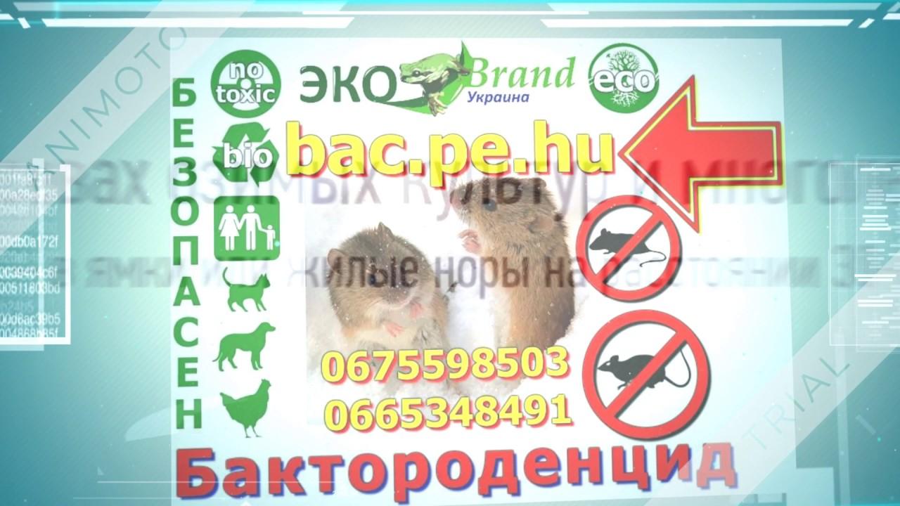Купить Ловушку для Крыс и Мышей! №1 в Украине! - YouTube