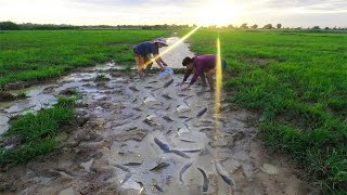 Amazing Fishing Two Men scatter The Water Catch Many Fish In Rice Field Near Village This Month