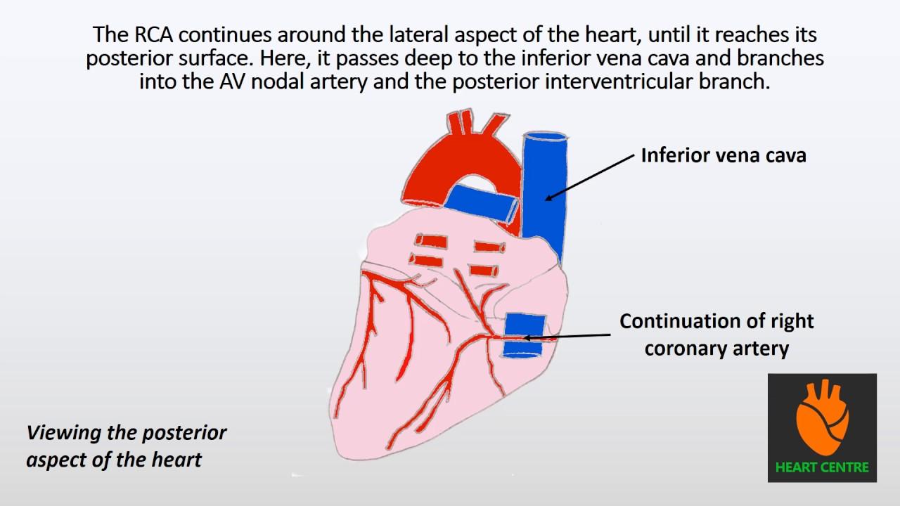 heart diagram rca [ 1280 x 720 Pixel ]