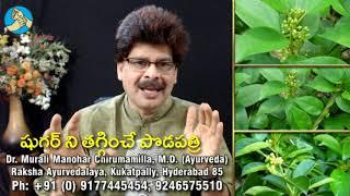 ఈ మొక్క మీ షుగర్ వ్యాధిని తగ్గిస్తుంది. This plant will control your Diabetes (in Telugu)
