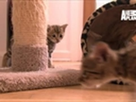 Kittens Hone Hunting Skills | Too Cute