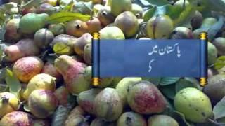 GUAVA in PAKISTAN mpg