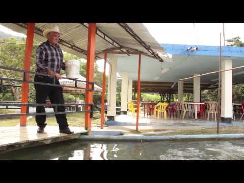 El pargo unam una nueva alternativa en el mundo de la for Criar mojarras en casa