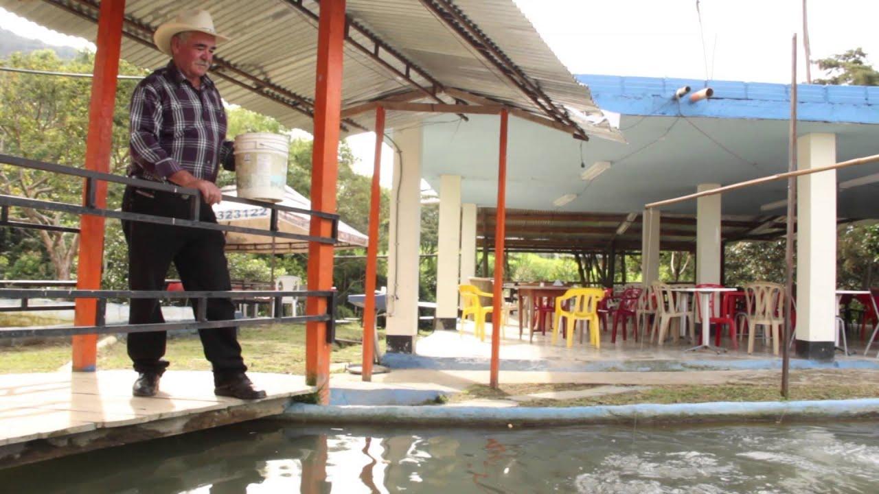 Criadero de peces youtube for Criaderos de pescados colombia