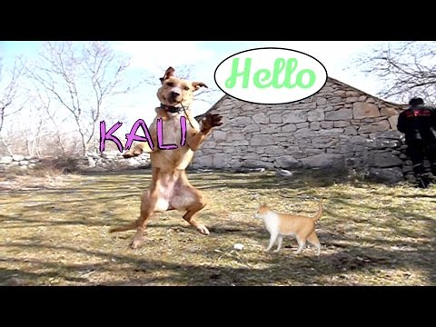 Kali Jumping Dog | Slow-Motion | Dog Jump