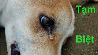 Tạm Biệt Mọi Người 😭 Eṁ Pİ Ăn Phải Bả Chó Của Trộm Chó .Đám Mą Chó C๐n OMG! Puṗṗy Died