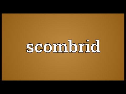 Header of scombrid
