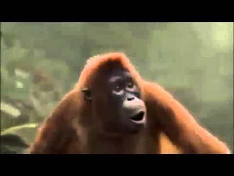 Hoch Die Hände Wochenende Affe