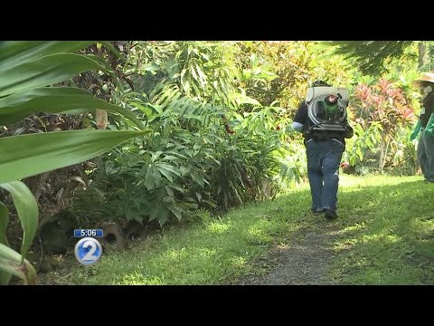 Hawaii Island schools on list of spraying sites near dengue fever cases