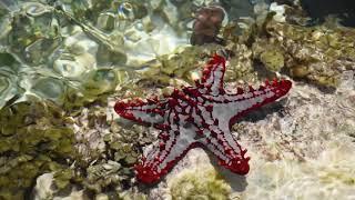 Занзибар 2021. Отлив на коралловом рифе.
