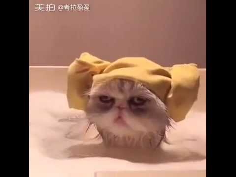 Funny cat videos for kids: Cat Bath so funny - Funny cat ... Funny Cat Videos For Kids