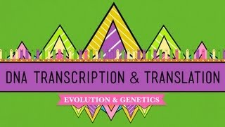 Crash Course: Biology: DNA Transcription thumbnail