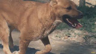 Spoke Tales: Tale of the trail dog - Valdivia EWS - Ep.1