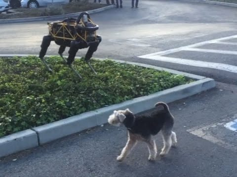 Download Youtube: Raw: Real Dog Meets Robot Dog
