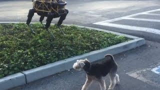 Raw: Real Dog Meets Robot Dog