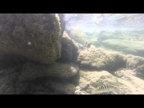Costa Rica underwater. Salt water