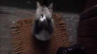 Кошка просится в дом Cat