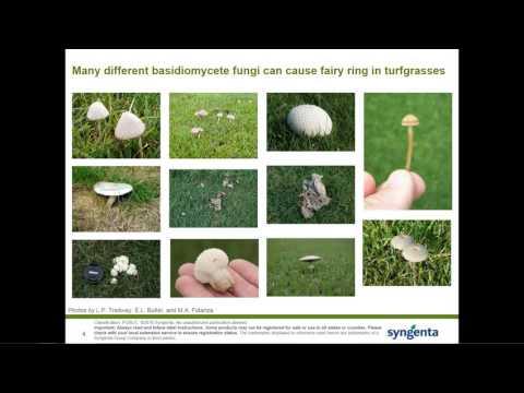 Preventative Fairy Ring Program