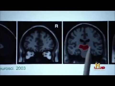 The Secrets of The Human Brain Full Documentary