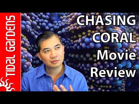 Tidal Gardens Movie Review of Chasing Coral