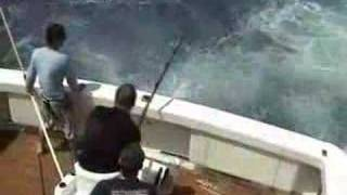450 pound Black Marlin eaten by shark.