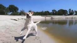Urlaub mit Hund bei Landal GreenParks