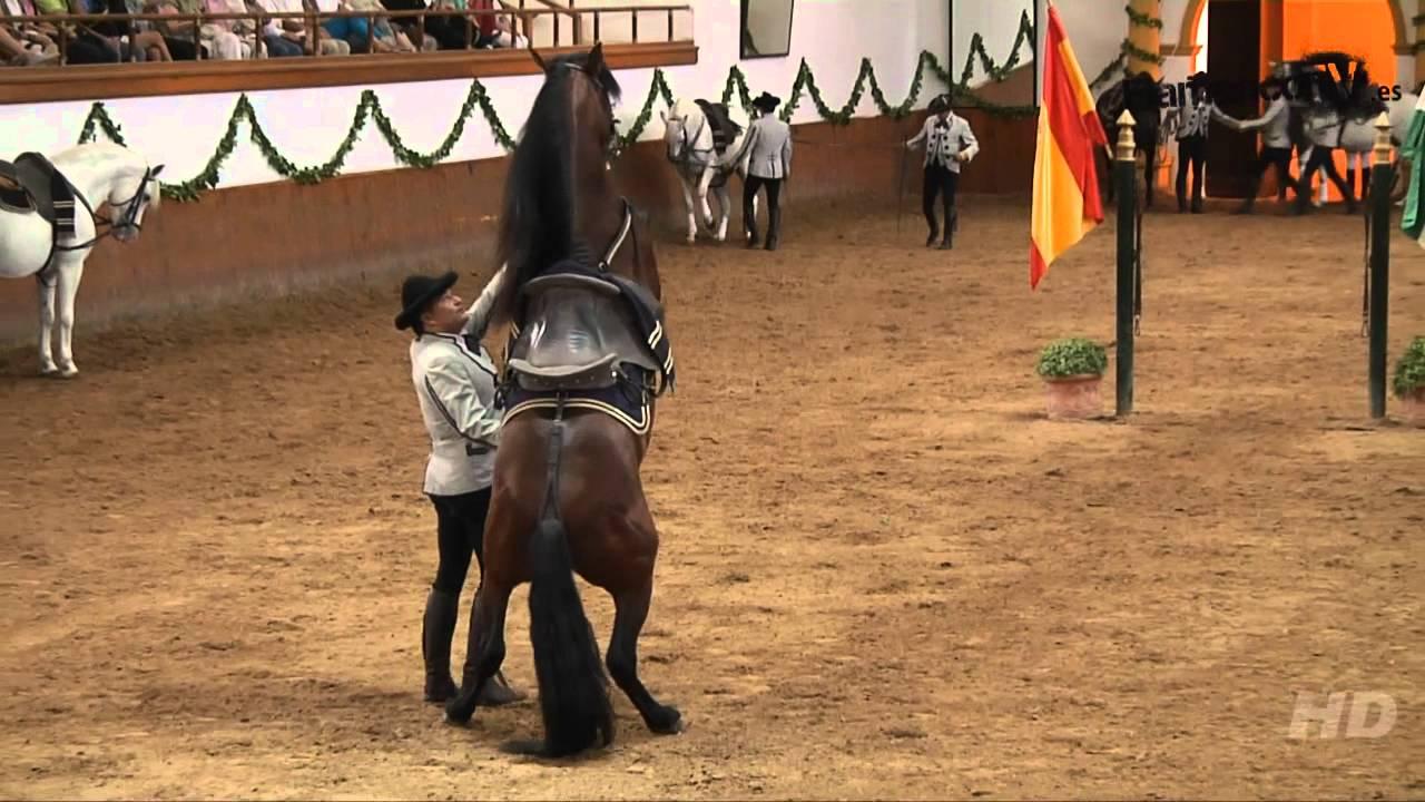 Saltos De Caballos Doma Clásica Fundación Real Escuela Andaluza De Arte Ecuestre Youtube