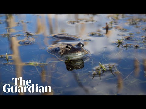 The Joy of Frogs:  a 360 film about the mating season