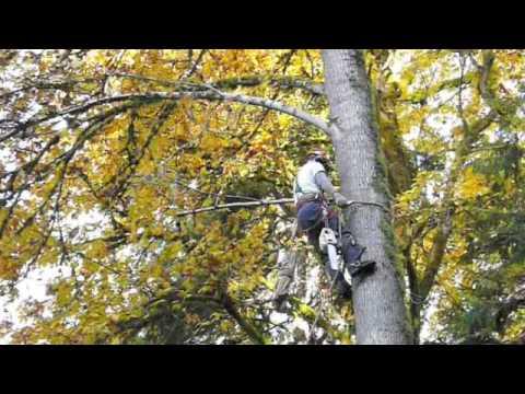 Gambier Island Tree Falling - West Bay Church Camp
