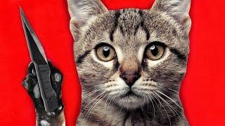 KILLER CAT (Garry