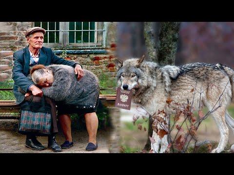 احضر الذئب الى الرجل جواز سفر قديم وعندما فتحه وجد شيئا غريبا