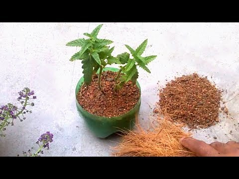 Grow plants faster using coco peat | How to use coco peat for gardening