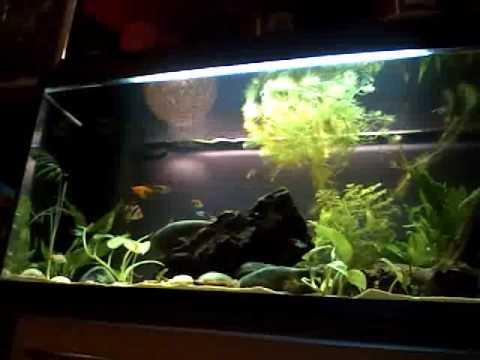 zimmerpflanzen wasserpflanzen und fische im aquarium youtube. Black Bedroom Furniture Sets. Home Design Ideas