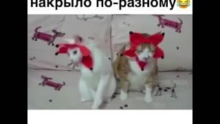 Коты на Новый год после валерьянки