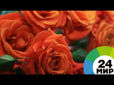 История бизнес-успеха: Армения снабжает ЕАЭС розами, овощами и вином