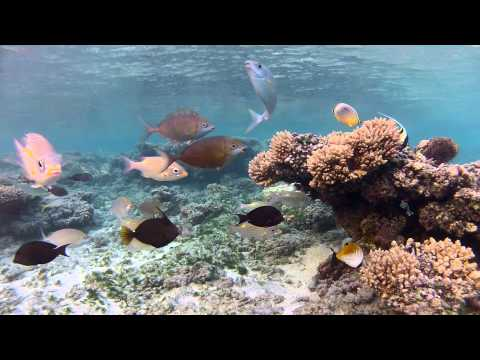 HD Open-Aquarium: Inside a Tropical Lagoon