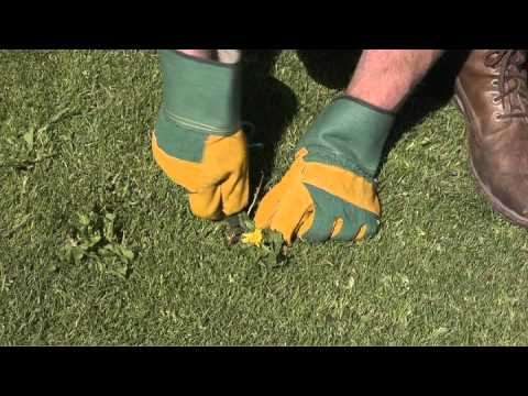 Summer Lawn Care Video