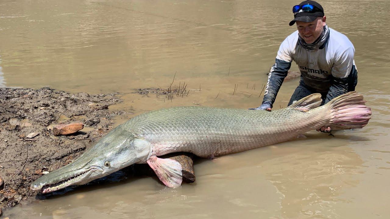 Australian guy catches Huge Monster Alligator Gar - YouTube