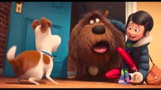 Тайная жизнь домашних животных - Трейлер №2 (дублированный) 720p