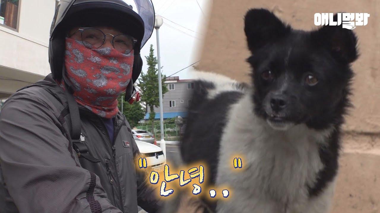 매일 헤어져야하는 청소부 아저씨와 강아지 깜이 이야기ㅣA Cleaner And A Dog Who Have To Part With Each Other Every Day