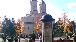 Panseluțe culese de pe straturile din Iași pentru pelerini