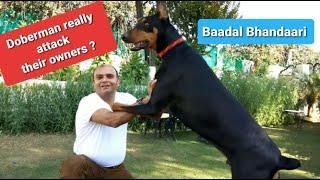 All about a Doberman | By Baadal Bhandaari (Pathankot) | 9878474748