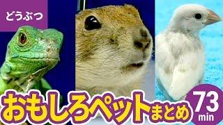 登場する動物:スーパーフェレット/セキセイインコ/文鳥/シマリス/...