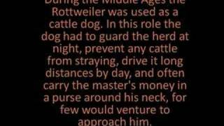 Brief History Of The Rottweiler
